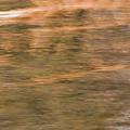 Autumn Water by Britt Runyon