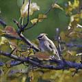 Autumn Waxwing 2 by Kerri Farley