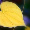 Autumn Whisper by Debra Straub