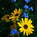 Autumn Wildflowers by Lisa Porier