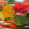 Autumn Wind by Barbara  White