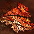 Autumn Wind by Jutta Maria Pusl
