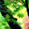 Autumn Wind by Vicki Hone Smith