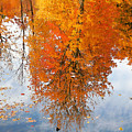 Autumn With Colorful Foliage And Water Reflection 19 by Jeelan Clark