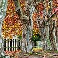 Autumn Wonderland by Joy of Life Arts Gallery