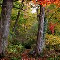 Autumn Woodland by Jessica Jenney