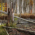 Autumn Woodland Marsh Scene by Randall Nyhof