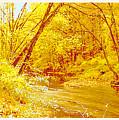 Autumn Woodland Stream Pennsylvania Digital Art by A Gurmankin
