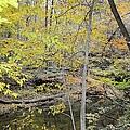 Autumn Woods 2 by Bonfire Photography