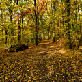 Autumn Woods by Brothers Beerens