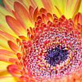 Autumn Yellow Flower by Gergana Chakalova