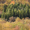 Autumn2 by Luigi Barbano BARBANO LLC