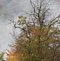 Autumn3 by Luigi Barbano BARBANO LLC
