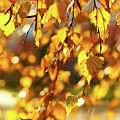 Autumnal Curtain by Tgchan