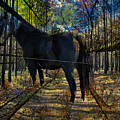 Horse In The Autumn Forest by Silva Wischeropp