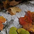 Autumnal Melange by Linda Goad