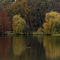 Autumnal by Mihail Antonio Andrei