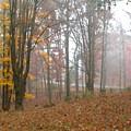 Autumnal Mist by Paul Sachtleben