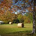 Autumnal Scenery Along Helmstetler Road by Matt Taylor