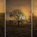 Autumnal Triptych. by Piotr Dominiak