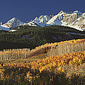 Autumnal View Of Aspen Trees And The by Panoramic Images