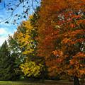Autumn's Artwork by Stephanie Hanson
