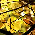 Autumn's Revelry by David Ross