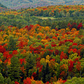 Autumns Colors by David Lee Thompson