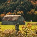 Autumns Colors by Sandra Cunningham