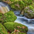 Autumn's Creek 2 by Veikko Suikkanen