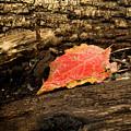 Autumn's End by Jim DeLillo