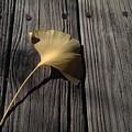 Autumn's First Fall by Liza Eckardt