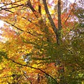 Autumn's Gold - Photograph by Jackie Mueller-Jones