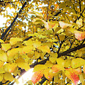 Autumns Gold by Karin  Dawn Kelshall- Best