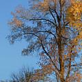 Autumn's Gold  - No 2 by Nikolyn McDonald