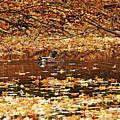 Autumns Mallards by Debbie Oppermann