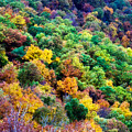 Autumn's Palette by Lana Trussell