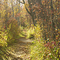 Autumns Path by Elaine Mikkelstrup