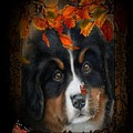 Autumn's Pup by G Berry