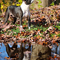 Autumn's Reflection by Susan Herber