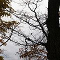 Autumn's Silhouette by Linda Shafer