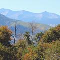 Autumns Telltale Signs  by Dale Jackson