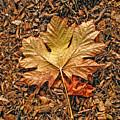 Autumn's Textured Maple Leaf by Jennie Marie Schell