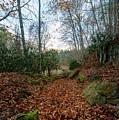 Autumn's Trail by Michael Scott