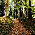 Autumn's Trail by Trina Ansel