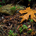 Autumn's Treasure by Dean Birinyi