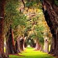 Avenue Of Oaks 2 I Am The Way by Reid Callaway