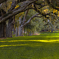 Avenue Of Oaks 2 St Simons Island Ga by Reid Callaway