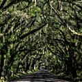 Avenue Of Oaks by Erika Fawcett