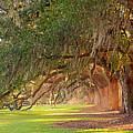 Avenue Of Oaks by Linda Vodzak